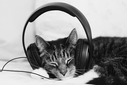 cats are musical animals